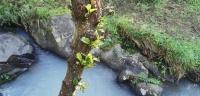 Rio Mau